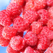 Raspberries on a blue background - 图库照片