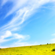 Green meadow and blue sky — Stock Photo #3793520