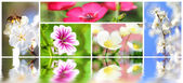 Collage on the theme of the summer flowers — Stock Photo