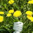Energy saving bulb in grass — Stock Photo