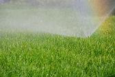 Grass sprinkler and rainbow — Stock Photo