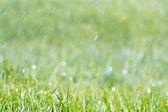 Summer rain — Stock Photo