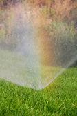 Grass, water and rainbow — Stock Photo