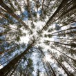 In the deep forest. looking up, shot with fisheye lens — Foto Stock