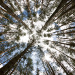 In the deep forest. looking up, shot with fisheye lens — Foto de Stock