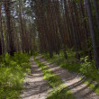 One way road in the deep forest — Stock Photo #3259760