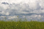 Green field under the daylight. country landscape — Stock Photo