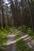 One way road in the deep forest — Stock Photo