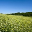Green hills under the blue summer skies — Stock Photo #3299147
