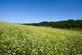 Green hills under the blue summer skies — Stock Photo