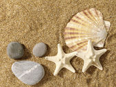 Sea still life over sand. Shellfish and starfish — Stock Photo