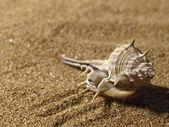 Sea still life over sand. — Stock Photo