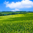 Green hills — Stock Photo