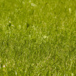 Green grass as pattern or background — Stock Photo
