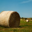 A field of straw — Stock Photo #3667747