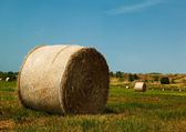A field of straw — Stock Photo