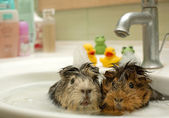 Funny animals in the pool — Stock Photo