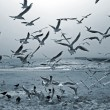 Stock Photo: Seagulls and doves