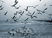 Seagulls and doves — Stock Photo