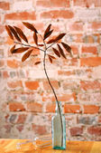用干树枝玻璃樽 — 图库照片