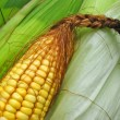 Stock Photo: Fresh corn