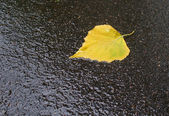 The fallen yellow leaf — Stock Photo
