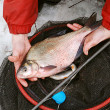 Stock Photo: Big bream