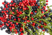 Bilberries and cranberries — Stock Photo