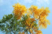 Autumn leaves against a blue sky — Stock Photo