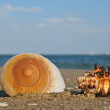 Shell — Stock Photo #3197098