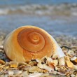 Shell — Stock Photo #3225149