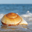 Shell — Stock Photo #3225311