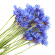 Bunch of cornflowers — Stock Photo