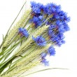 Cornflowers and cereals — Stock Photo #3403375