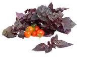 Basil and tomatoes — Stock Photo