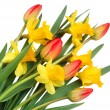 Red tulips and yellow narcissus - 图库照片