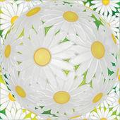 Manzanilla blanca — Foto de Stock