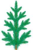 Spruce — Stock Vector