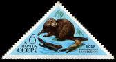 USSR - CIRCA 1973 Beaver — Stock Photo