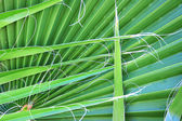 Palm leaves — Foto Stock