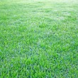 Stock Photo: Grre grass