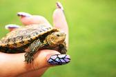 Turtle — ストック写真