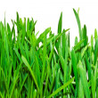 Fresh green grass on white background — Foto Stock
