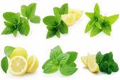Fresh mint with lemon — Stock Photo