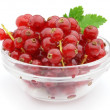 Currant — Stock Photo #3912760