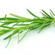 Rosemary — Stock Photo #3915442