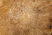 Close-up of old wood log — Stock Photo