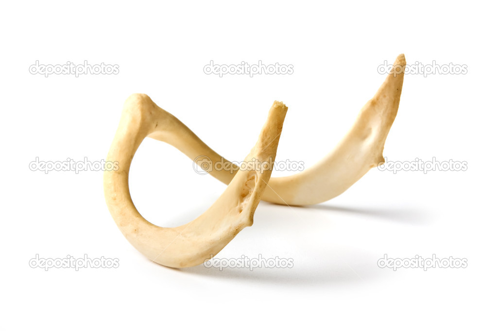 http://static4.depositphotos.com/1000143/311/i/950/depositphotos_3115593-stock-photo-old-bone-of-an-animal.jpg