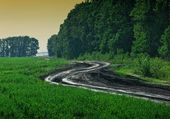 Winding rural road — Stock Photo