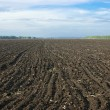 Stock Photo: Arable